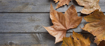 Autumn Fall Wood Background Stock Photography