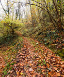 Autumn, fall, woodland lane after rain, Lunigiana, Italy Stock Photo