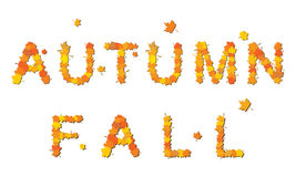 Autumn and fall Stock Image