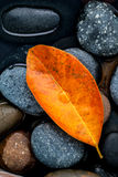 Autumn ,fall and zen like concepts orange leave fall on river st Royalty Free Stock Image