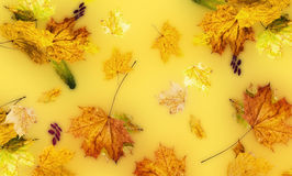 Autumn fallen down leaves Royalty Free Stock Photography