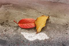 Autumn. Fallen leaves stock photo