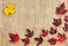 Autumn fallen leaves are arranged in a corner of the background. Yellow and red autumn leaves can be seen from above. Royalty Free Stock Photography