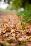 Autumn fallen leaves background. Autumn fallen colourful leaves close-up, shallow DoF stock photos