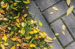 Autumn Fallen Leaves en el pavimento y el césped fotografía de archivo libre de regalías