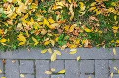 Autumn Fallen Leaves en el pavimento y el césped foto de archivo