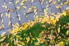 Autumn Fallen Leaves en el pavimento y el césped fotografía de archivo
