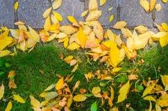 Autumn Fallen Leaves en el pavimento y el césped fotos de archivo