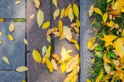 Autumn Fallen Leaves en el pavimento y el césped fotos de archivo libres de regalías