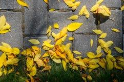 Autumn Fallen Leaves en el pavimento y el césped foto de archivo libre de regalías