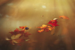 Autumn. Fallen leaves floating on the water Stock Photos