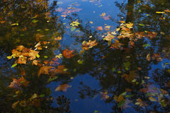 Autumn. Fallen leaves floating on the water Royalty Free Stock Photo