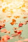 Autumn fallen leaves Royalty Free Stock Photos