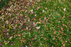 Autumn fallen leaves on the ground stock image
