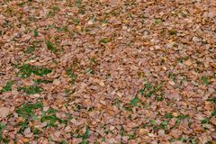 Autumn fallen leaves on the ground stock images
