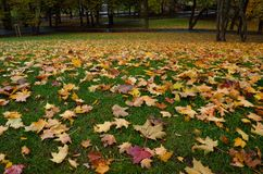 Autumn fallen leaves lie on the green grass. royalty free stock photo