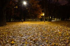 Autumn fallen leaves lie on the path in a city park. royalty free stock images