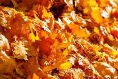 Autumn fallen leaves lit by sun light Stock Photos