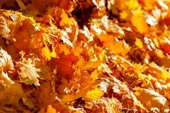 Autumn fallen leaves lit by sun light Stock Photos