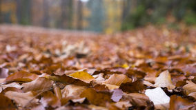 Autumn and fallen leaves Stock Photography