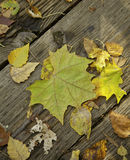 Autumn Fallen Leaves on Old Wood Stock Images