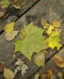 Autumn Fallen Leaves On Old Wood