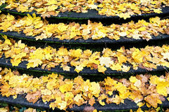 Autumn  with fallen leaves on  staircase Royalty Free Stock Photo