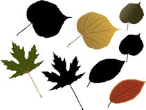 Autumn fallen leaves of trees Stock Images