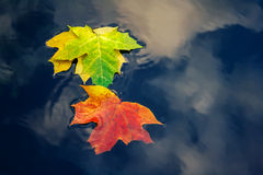 Autumn fallen yellow green red leaves on water Royalty Free Stock Photos