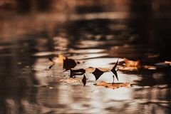 Autumn leaves in autumn landscape royalty free stock photography