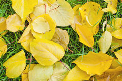 Autumn fallen leaves Stock Photography