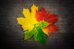 Autumn fallen red green yellow gold leaves on wood background Royalty Free Stock Photography