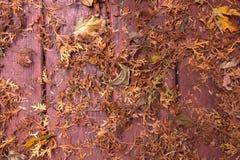 Autumn Fallen Leaves y pinos Imagen de archivo libre de regalías