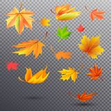 Autumn Fallen Maple Leaves Illustrations brillante Imágenes de archivo libres de regalías