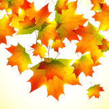 Autumn falling down foliage vector background. Autumn falling down orange foliage vector background Stock Image