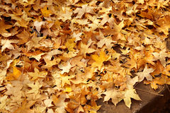 Autumn falling leaves Stock Photos