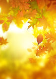 Autumn Falling Leaves Fotografia de Stock