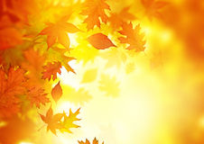 Autumn Falling Leaves Lizenzfreies Stockbild