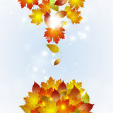 Autumn Falling Leaves Royalty Free Stock Image