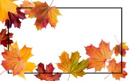 Autumn falling leaves. Autumnal foliage fall and poplar leaf fly stock photo