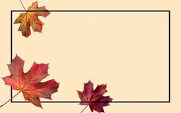Autumn falling leaves. Autumnal foliage fall and poplar leaf flying in wind motion blur. Autumn design. vector illustration