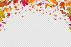 Autumn falling leaves. Autumnal forest foliage fall. Vector illustration isolated on white background. Withering leaf background, foliage banner with place royalty free illustration