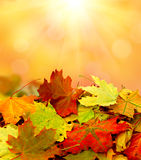 Autumn falling leaves background Stock Photos