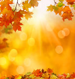 Autumn falling leaves background stock photo