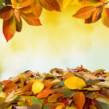 Autumn falling leaves background Royalty Free Stock Photography