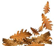 Autumn falling leaves for background. Autumn falling dry isolated leaves for background royalty free stock photos