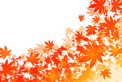 Autumn falling leaves. Background of autumn leaf color Royalty Free Stock Photos