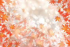 Autumn falling leaves. Background of autumn leaf color Royalty Free Stock Photo