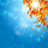 Autumn Falling Leaves on blue Background. Abstract autumn yellow leaves on sunny blue background Stock Photos