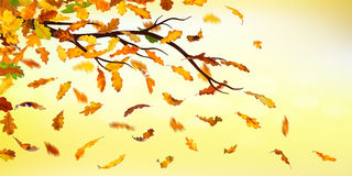 Autumn falling leaves Stock Image